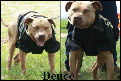 Best Cut Vest For Catch Dogs